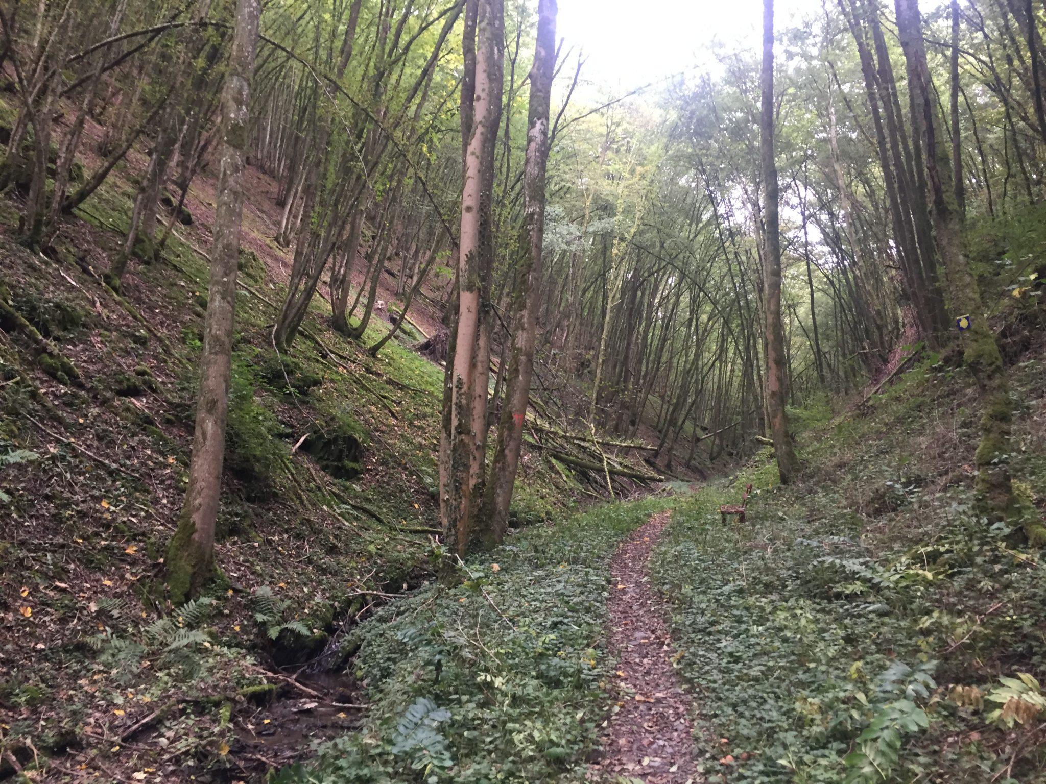 Idyllisches Stück des Mosel-Caminos hinter dem Kloster Engelport