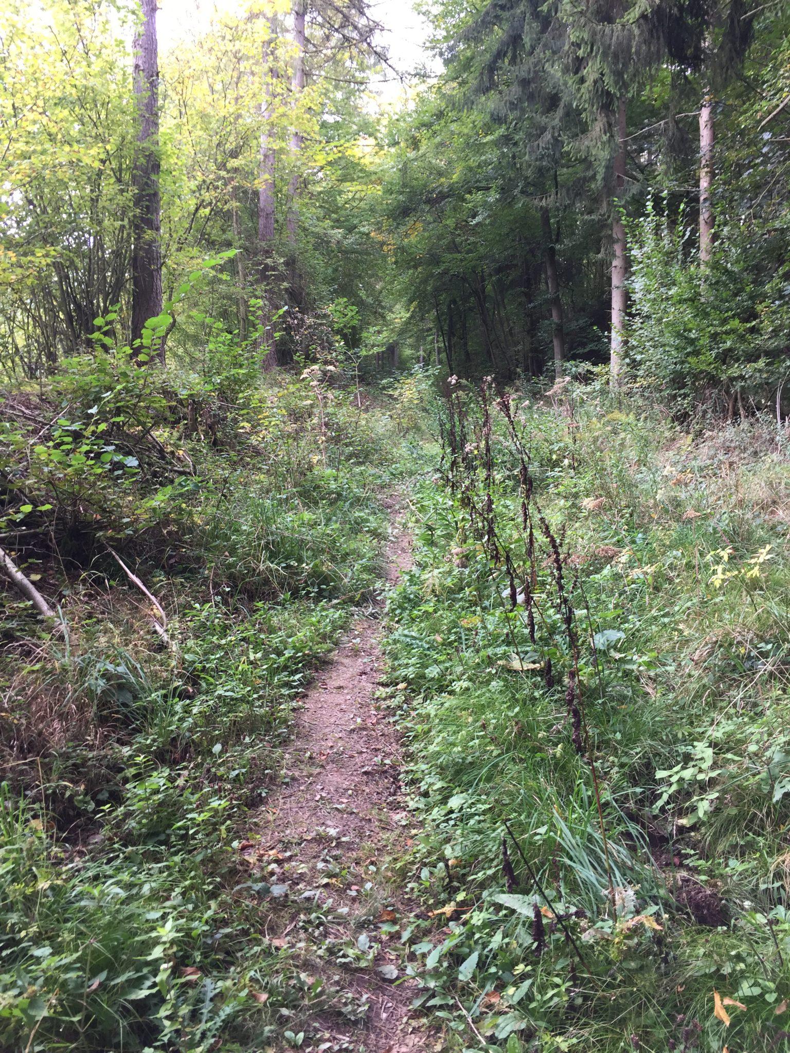 Mosel-Camino Etappe Engelport - Marienburg zwischen Beilstein und Bullay