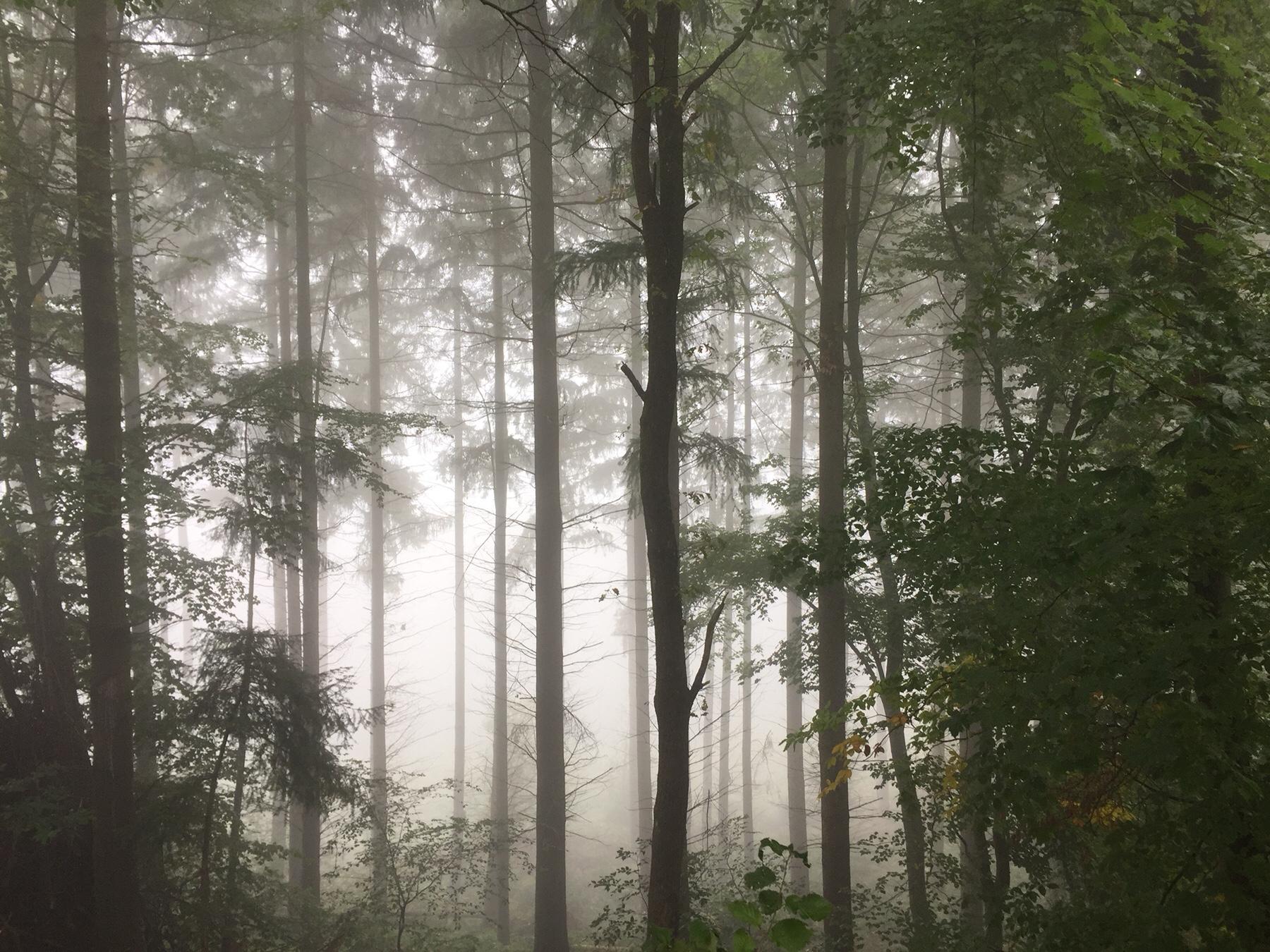 Wald im Nebel, Mosel-Camino, Etappe 7 von Schweich nach Trier