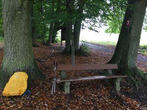 Eine riesige Eiche als natürlicher Regenschutz am Rheinsteig