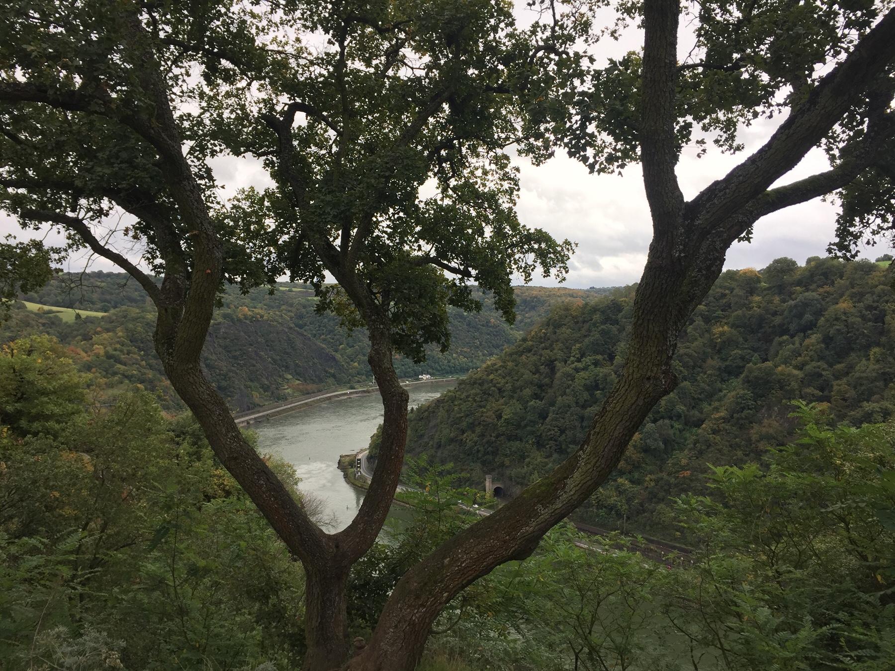 Auf dem Loreley Felsen, Rheinsteig auf dem Weg nach Kaub