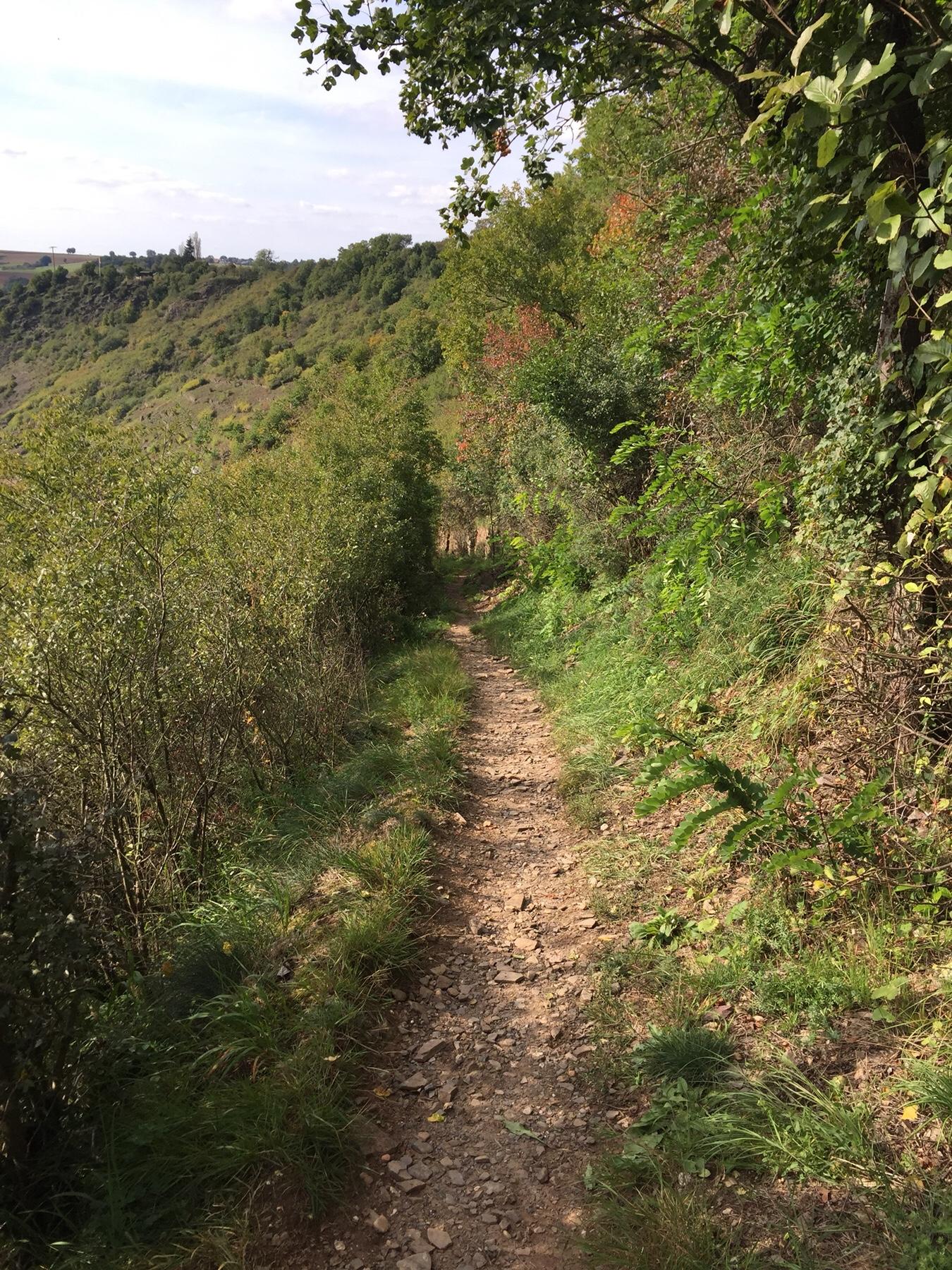Steiler Abstieg über Schotter nach Alken auf dem Mosel-Camino