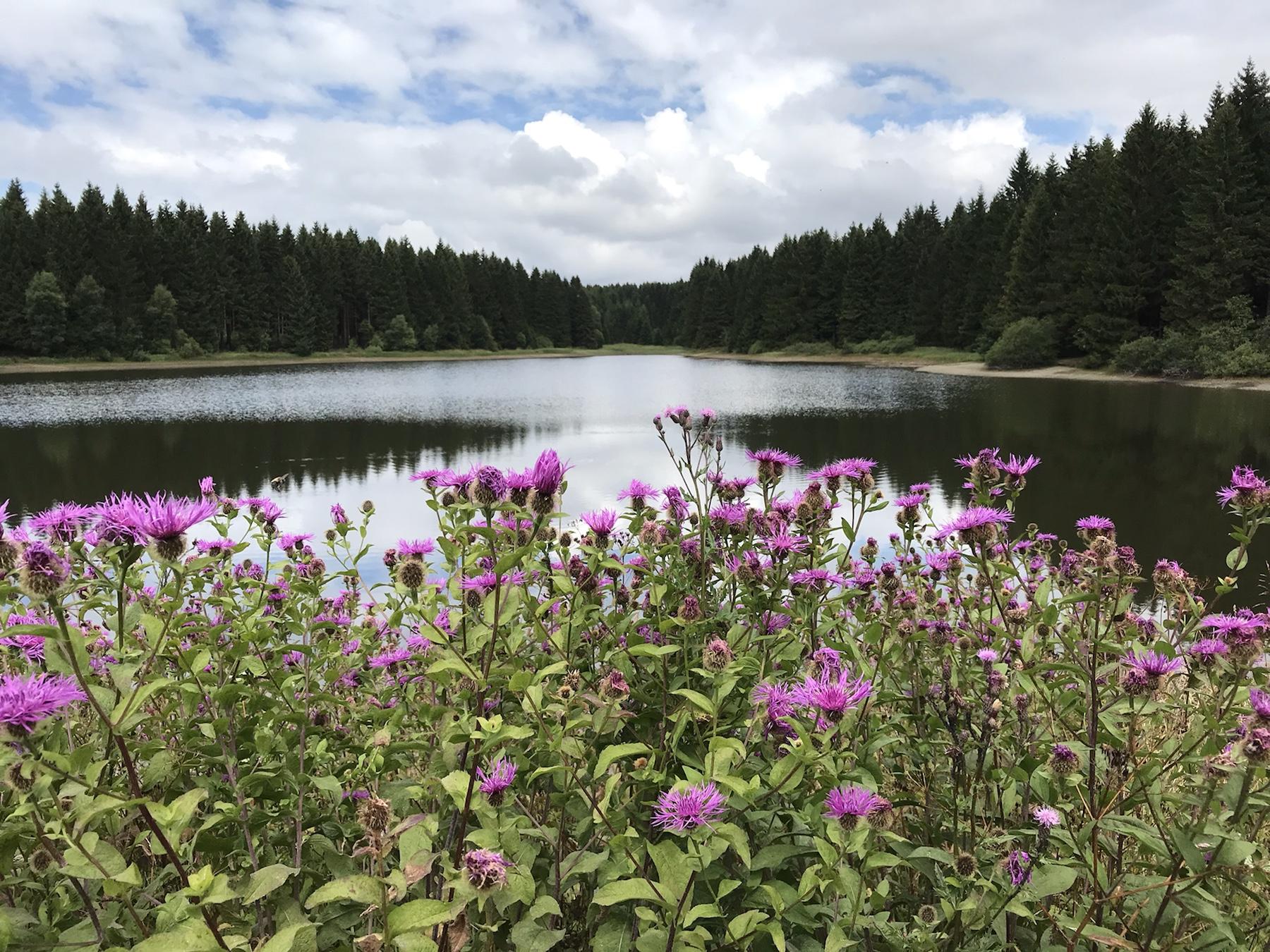 Highlight am Harzer Hexen-Stieg der Obere Nassewieser Teich