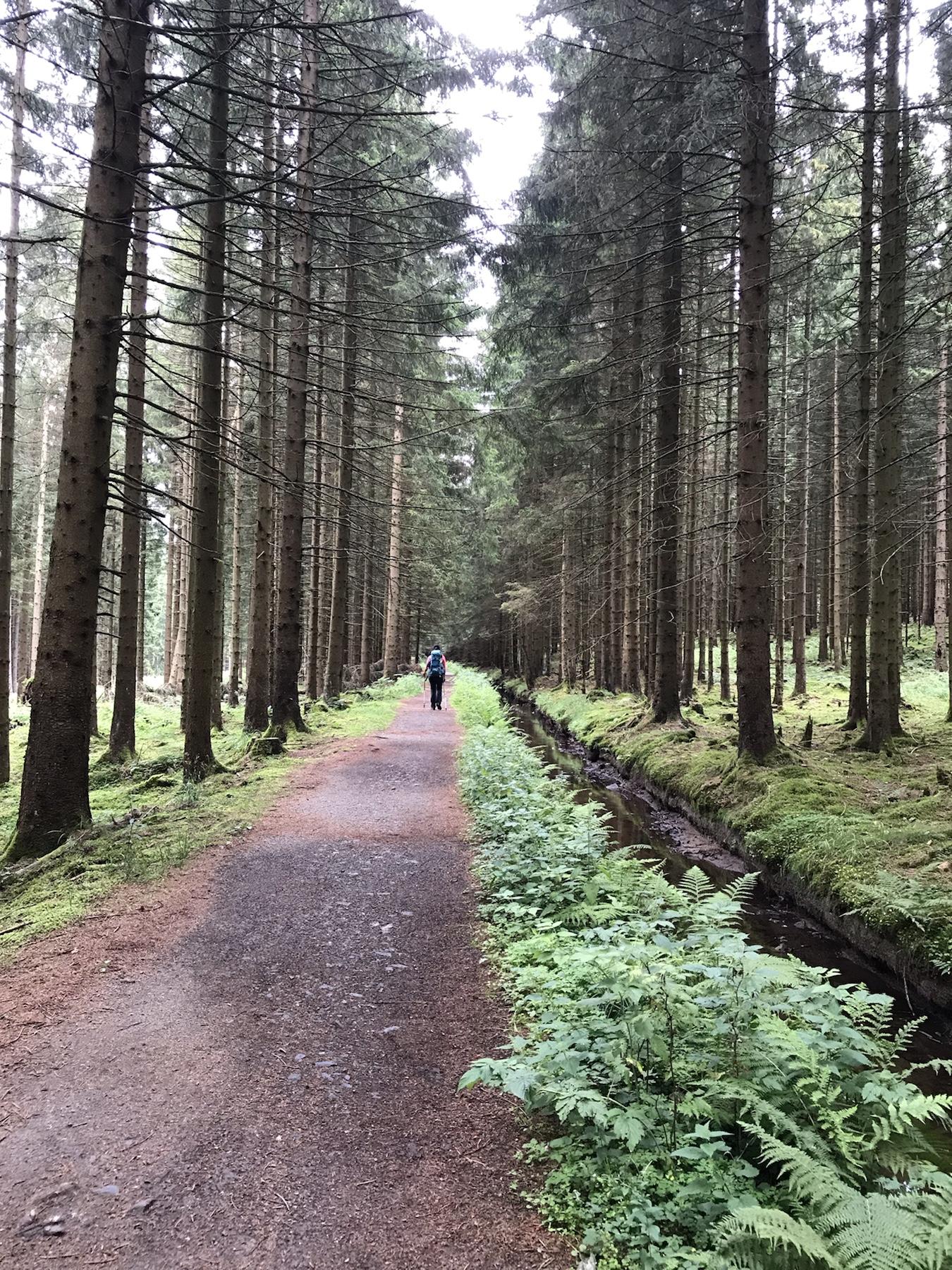 Der Harzer Hexen-Stieg verläuft entlang des Dammgrabens