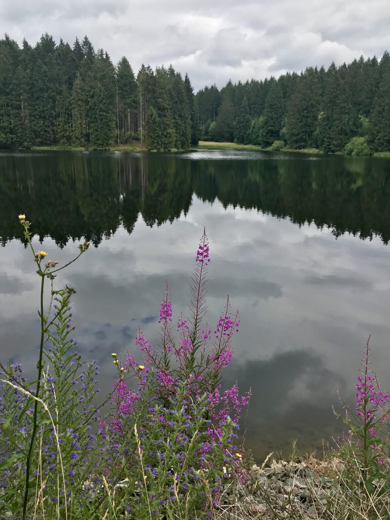 Blick auf den Bärenbrucher Teich in Buntenbock am Hexenstieg
