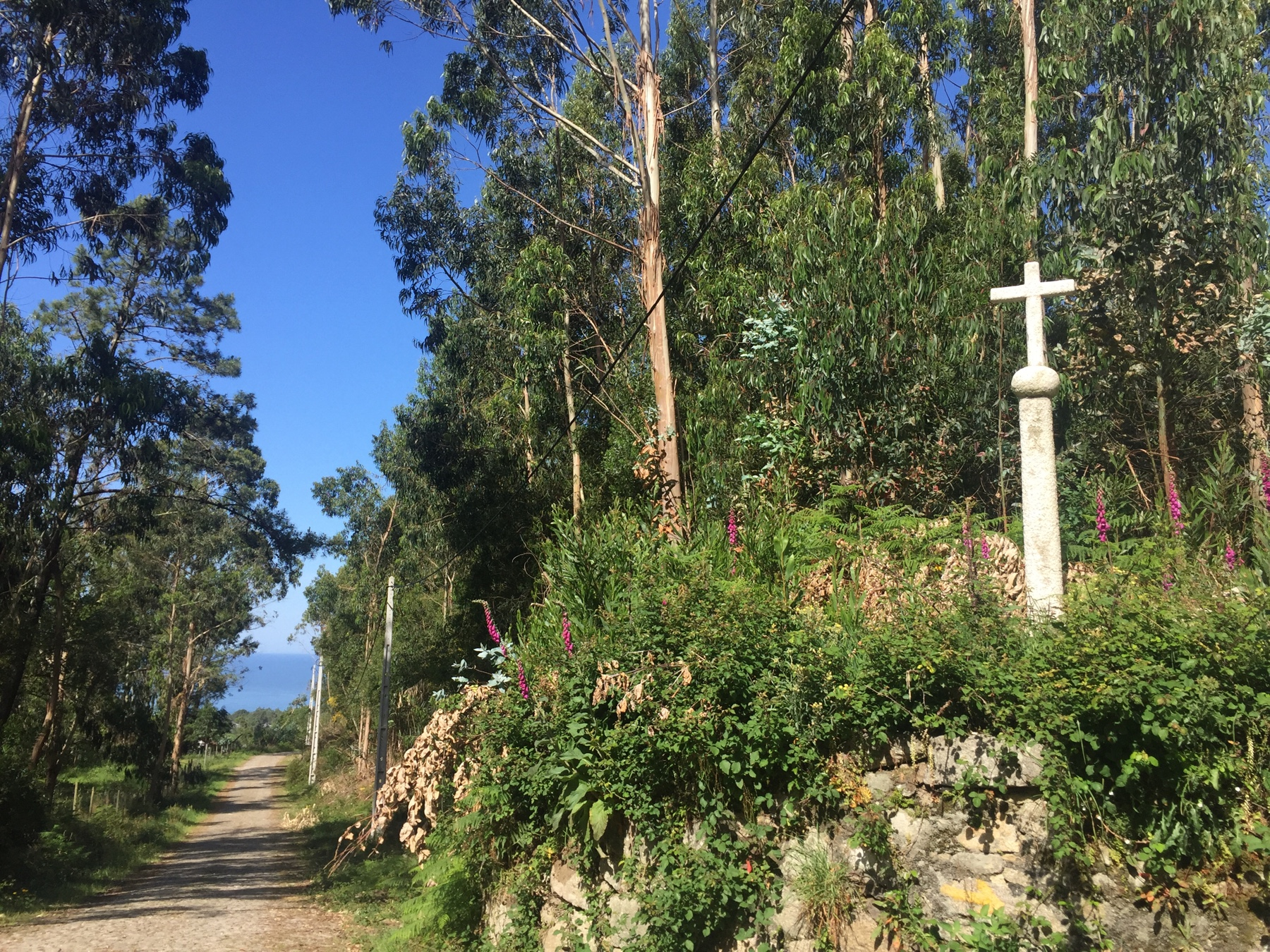 Traumkulisse auf dem portugiesischen Jakobsweg Caminho Portugues