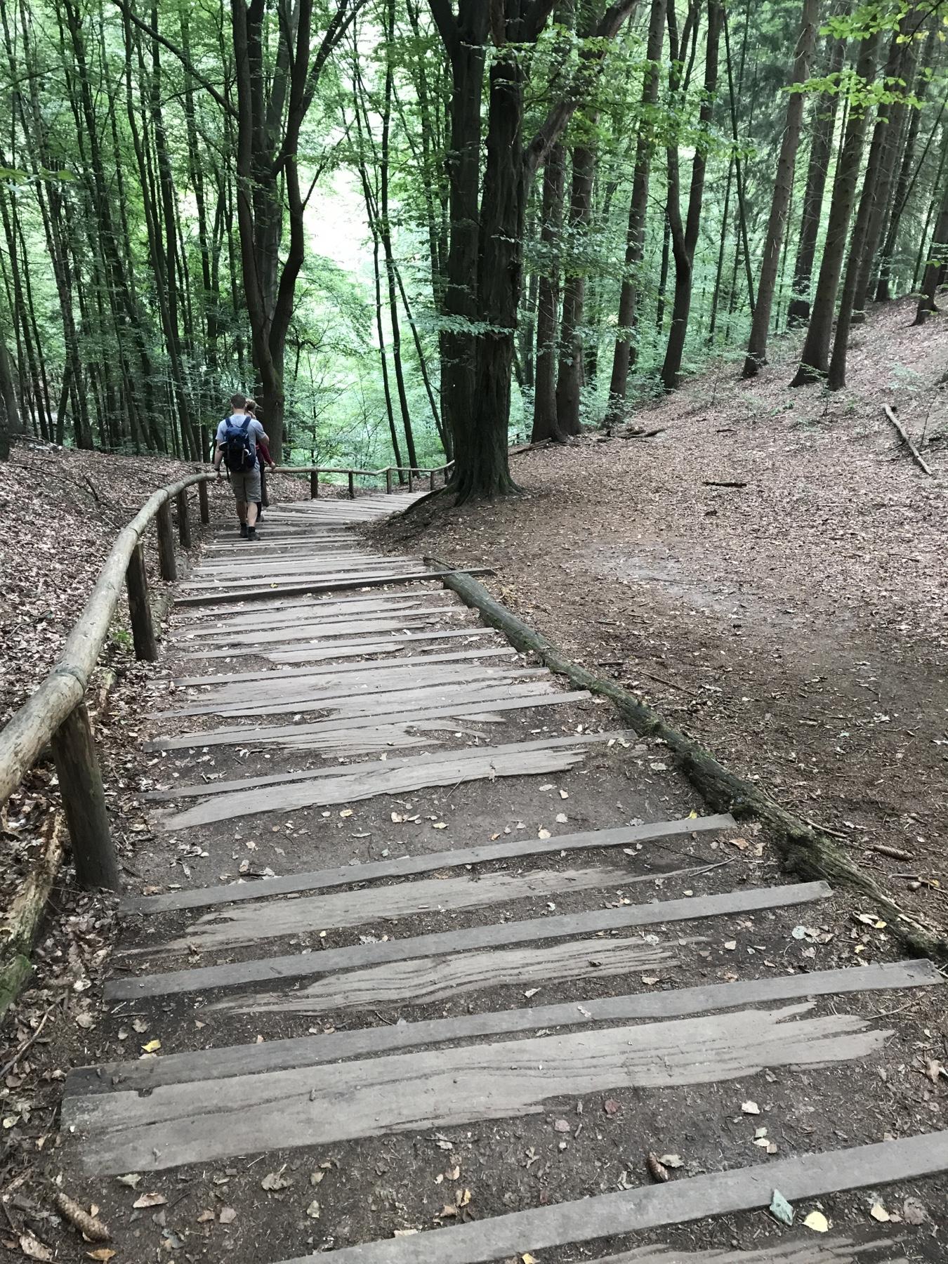 Abstieg in den Amselgrund Malerweg Etappe 2 Wehlen Hohnstein