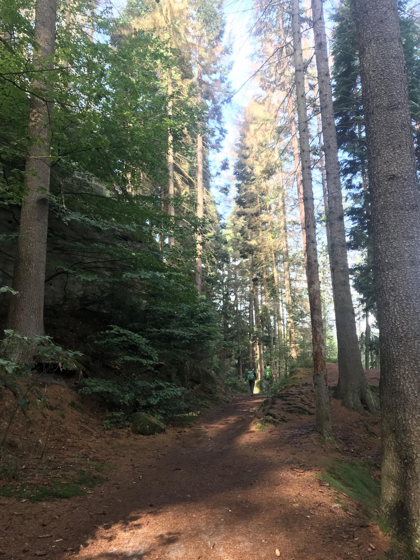 Auf dem Waldweg zur Gautschgrotte, Malerweg Etappe 3, Hohnstein Altendorf