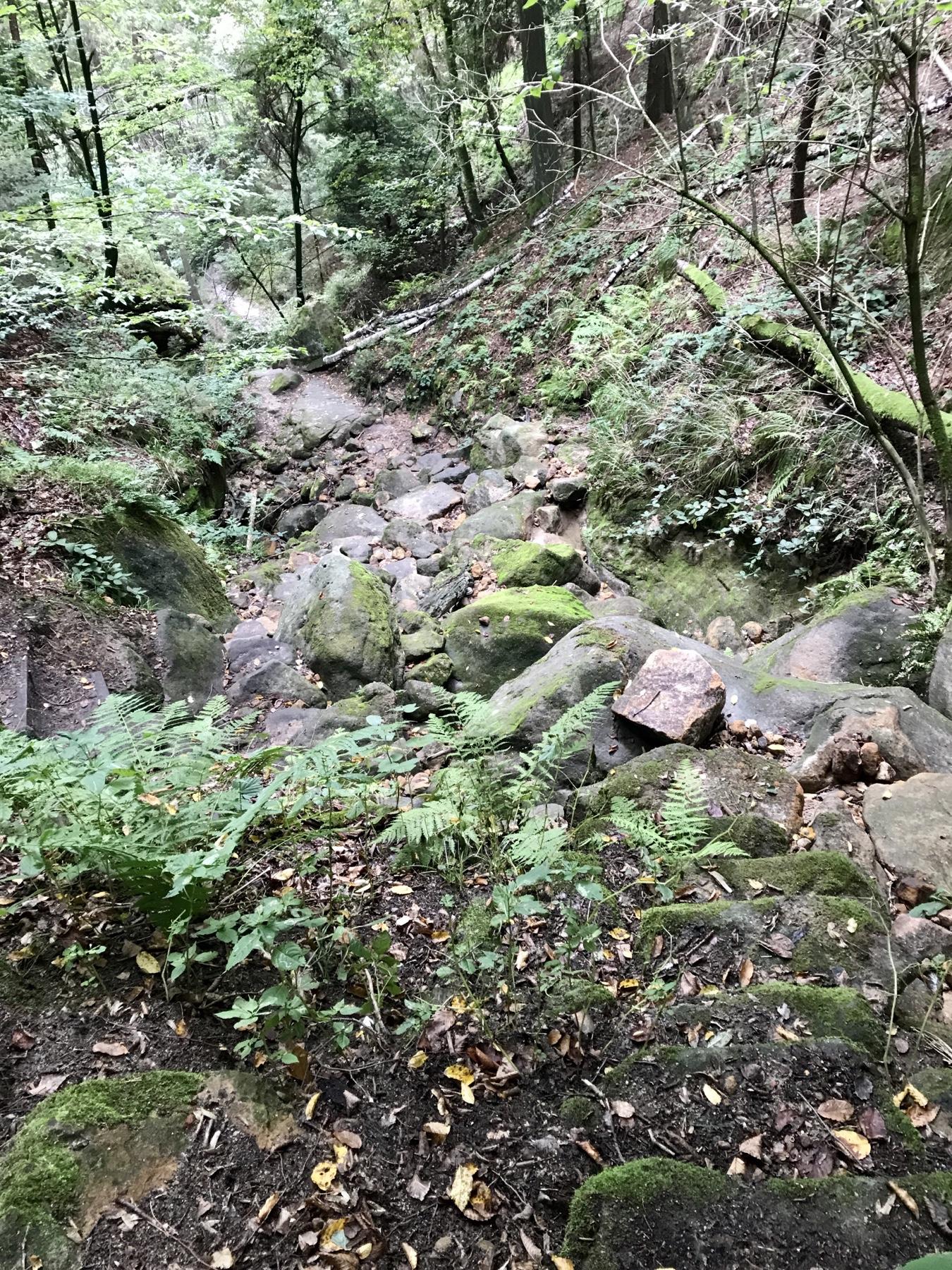 Abstieg durch die Dorfbachklamm, Malerweg Etappe 4, Altendorf Neumannmühle