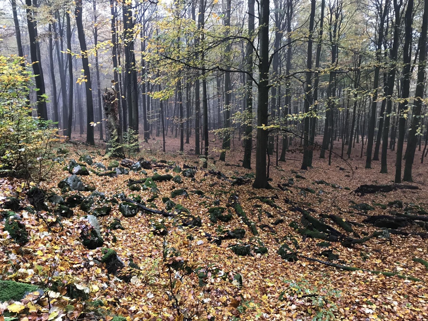 Etappe 10 auf dem Saar-Hunsrück-Steig