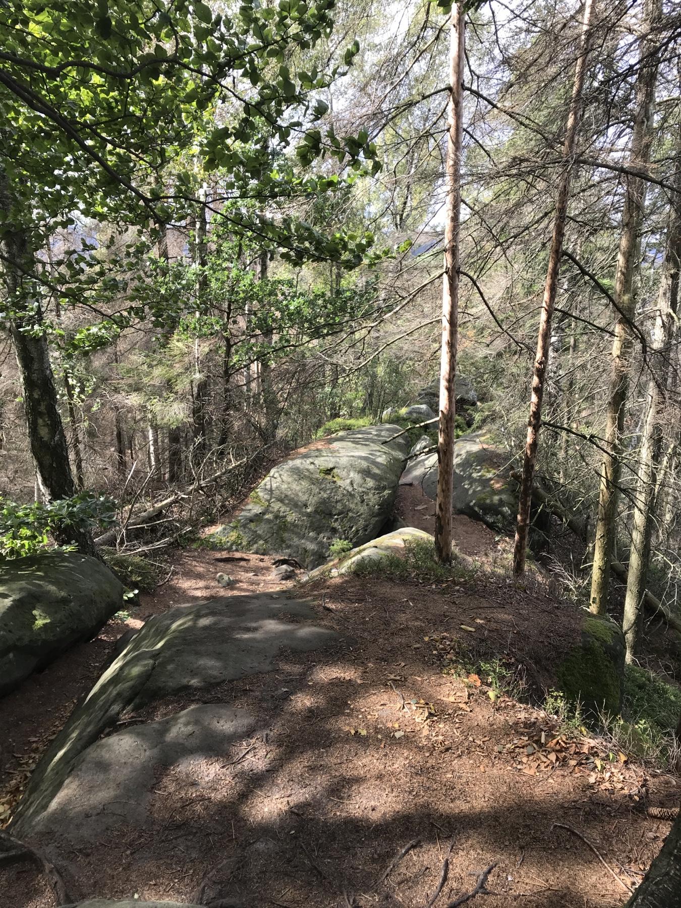 Versperrte Aussicht Malerweg Etappe 5 Neumannmühle Schmilka