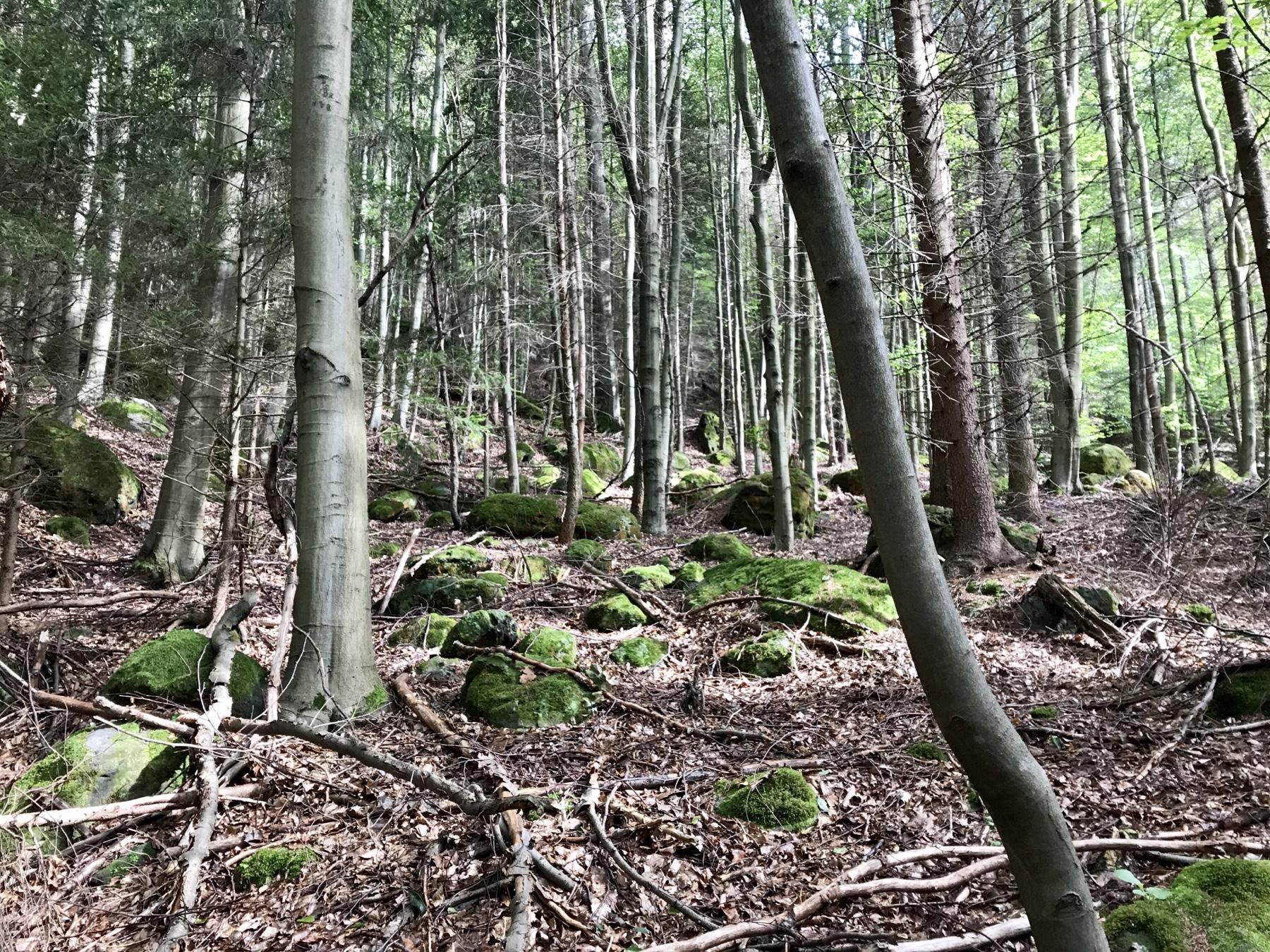 Naturbelassener Wald Malerweg Etappe 5 Neumannmühle Schmilka
