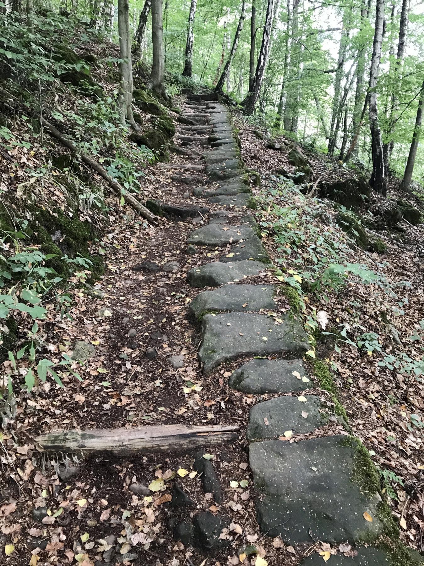 Aufstieg nach Schöna, Malerweg Etappe 6, von Schmilka nach Gohrisch