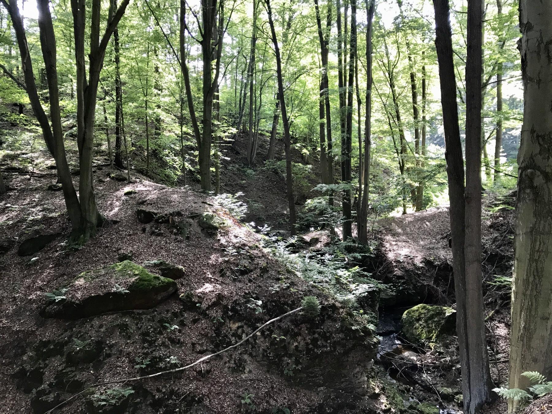 Malerweg Etappe 6, von Schmilka nach Gohrisch