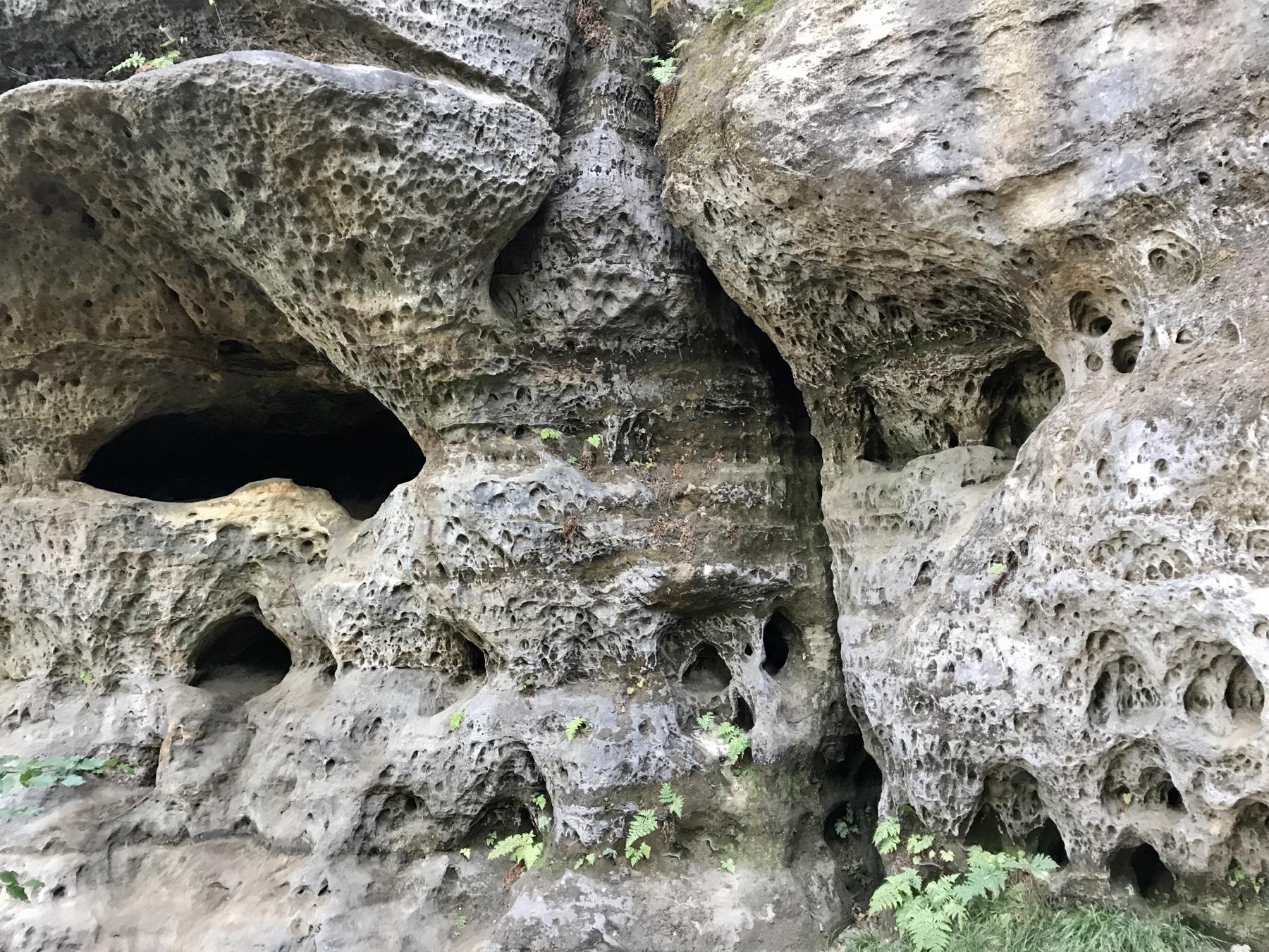 Diebshöhle, Quirl Malerweg Etappe 7, Gohrisch Königstein