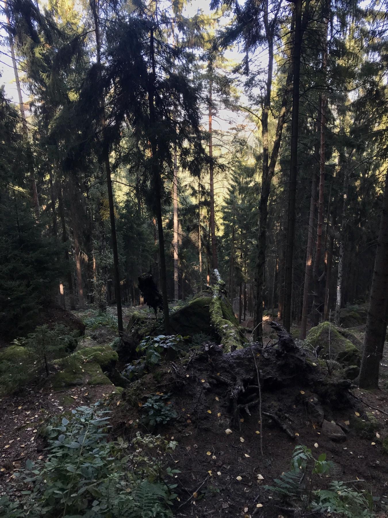 Quirl Malerweg Etappe 7, Gohrisch Königstein
