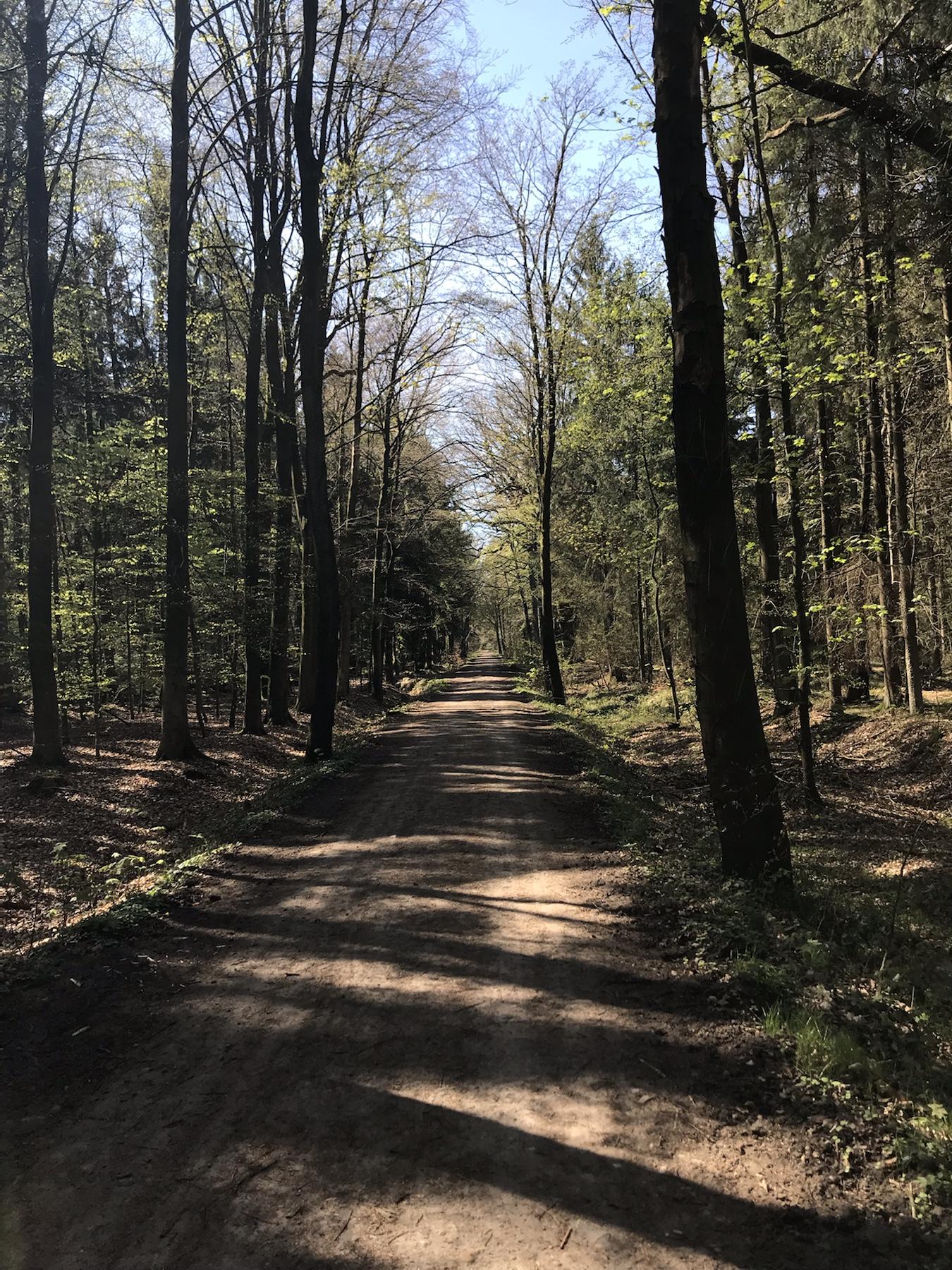 Weg durch den Jersbeker Forst