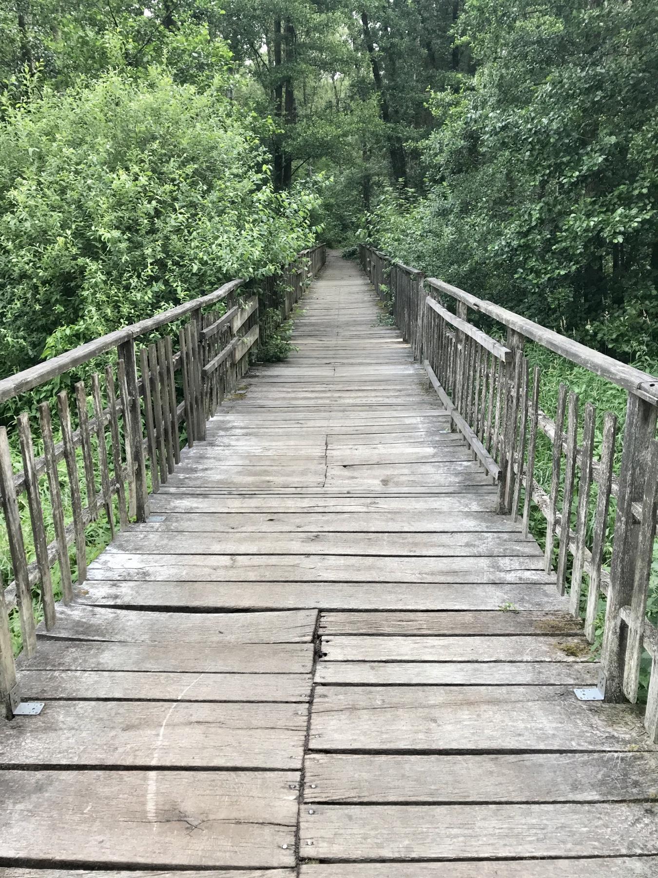 Pionierbrücke über Bille und Moor