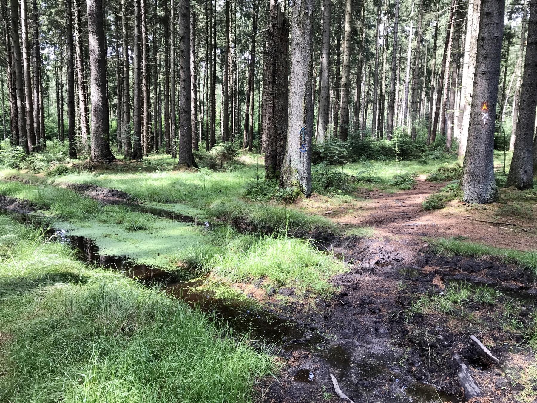 Pfützenlandschaft Sachsenwald Aumühle Stormarnweg Etappe 1