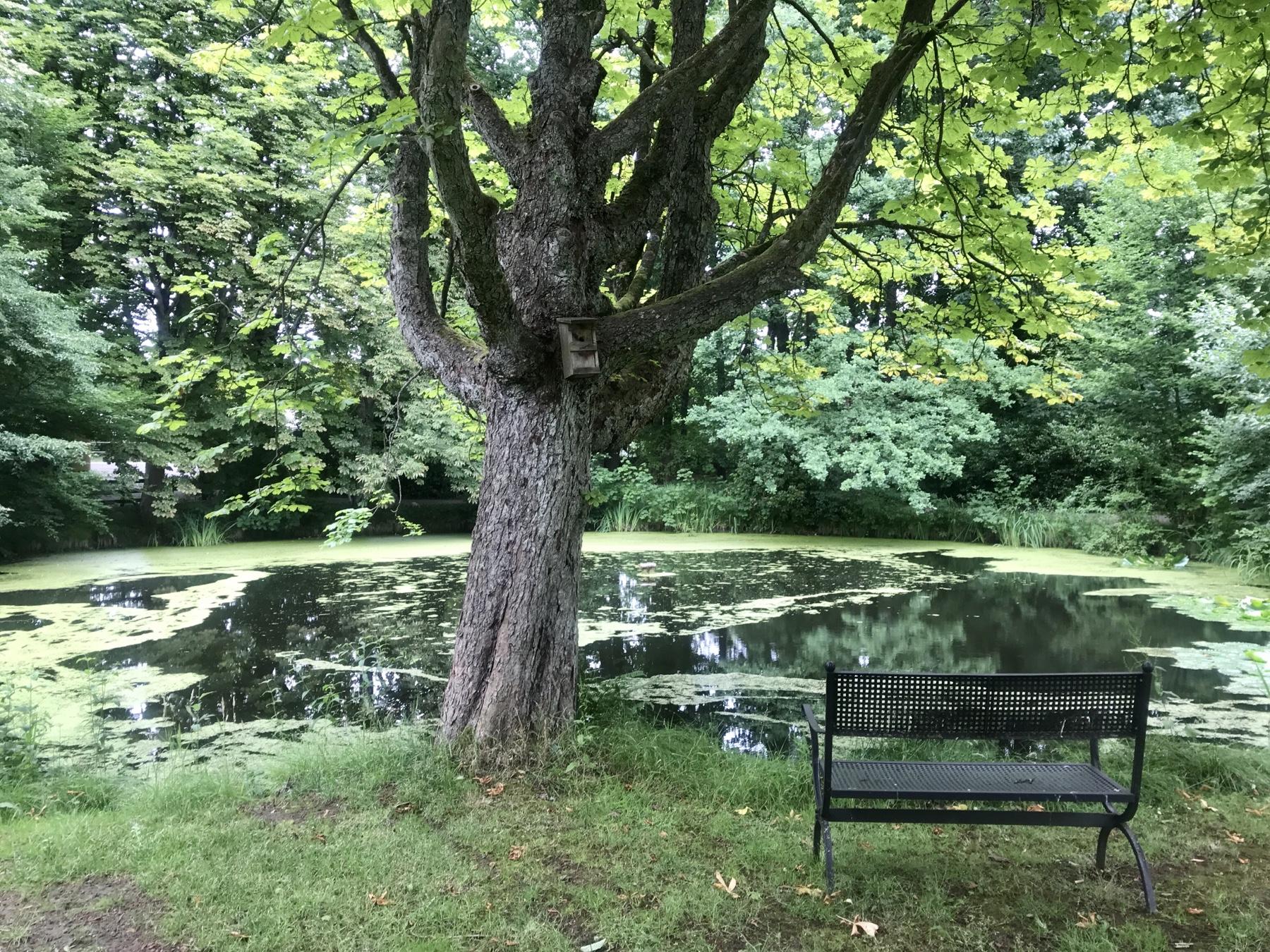Teich vor der Seniorenresidenz Lichtensee, Stormarnweg Etappe 2
