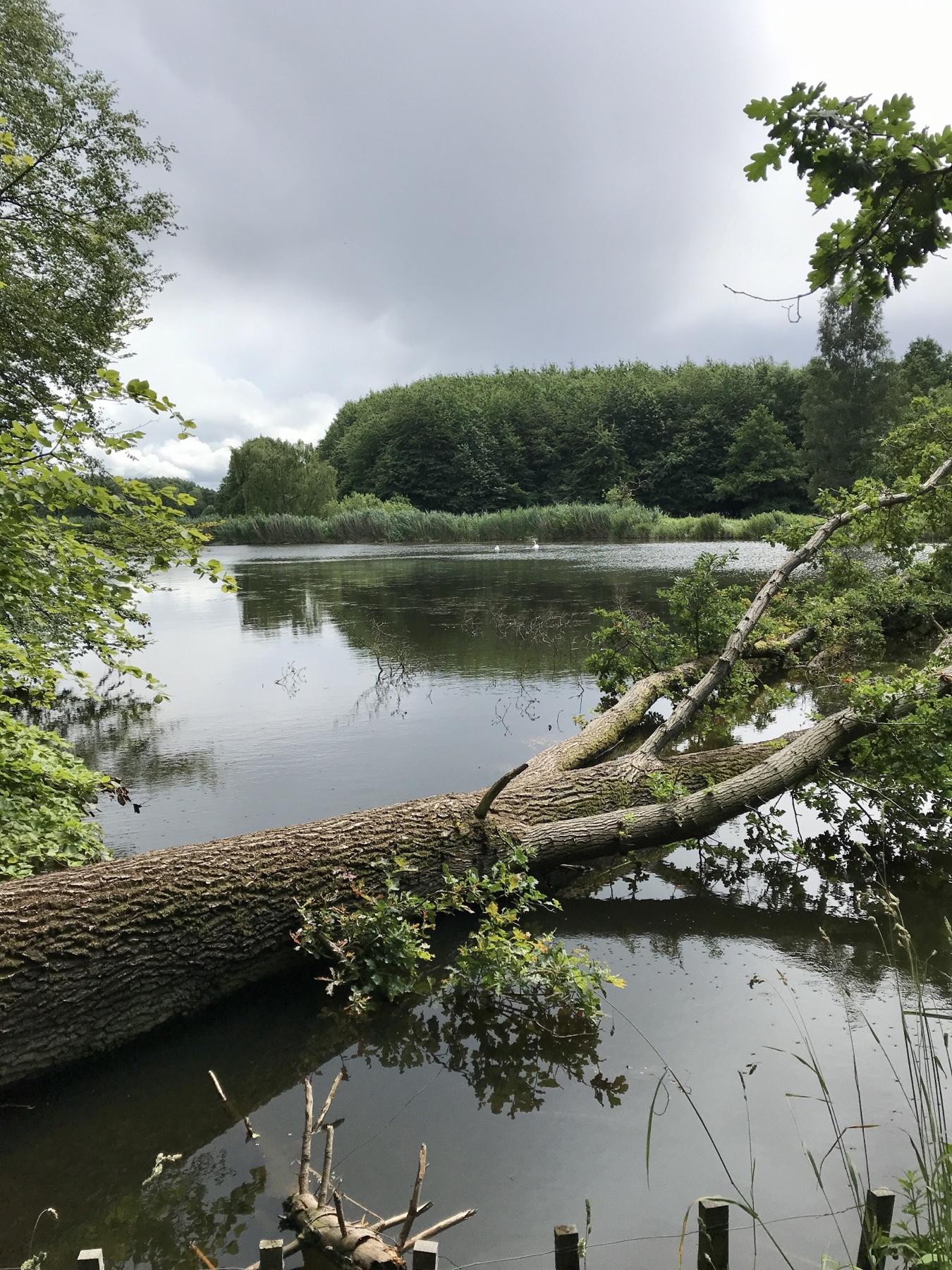 Fischteiche Grabau, Stormarnweg Etappe 4 auf dem Weg nach Nütschau