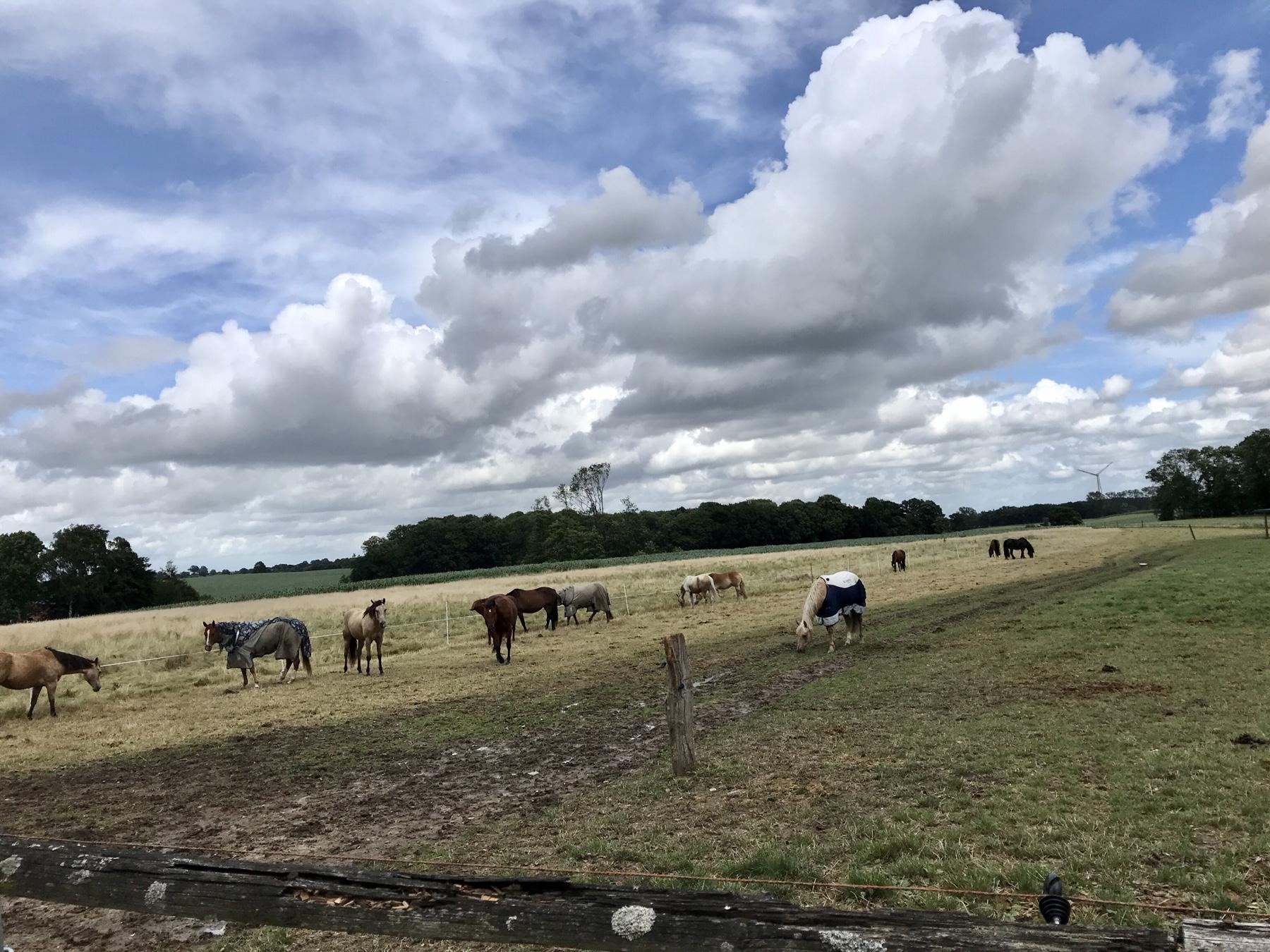 Pferdeweide hinter Grabau auf dem Weg nach Nütschau, Stormarnweg