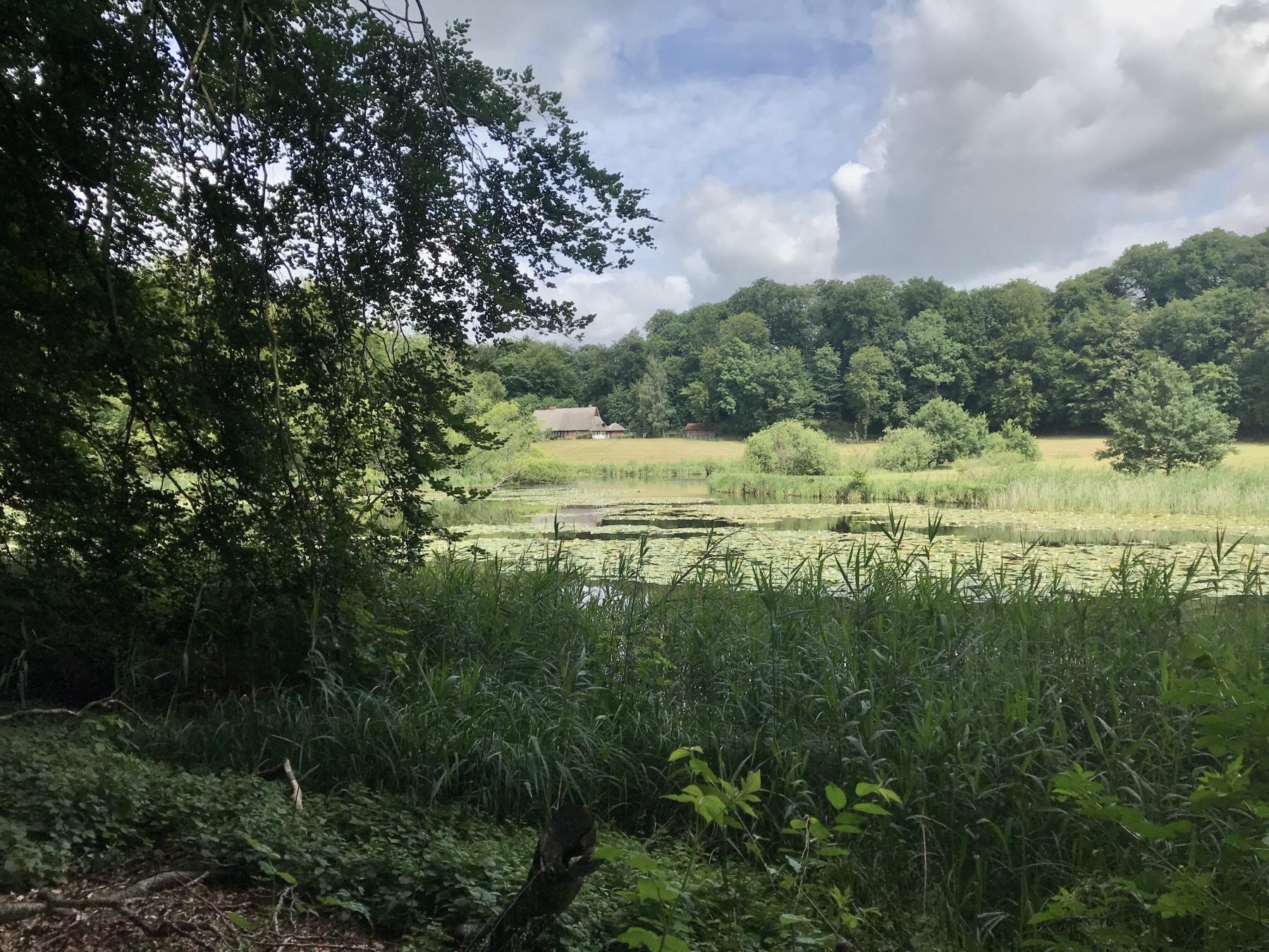Teich in der Nähe des Klosters Nütschau