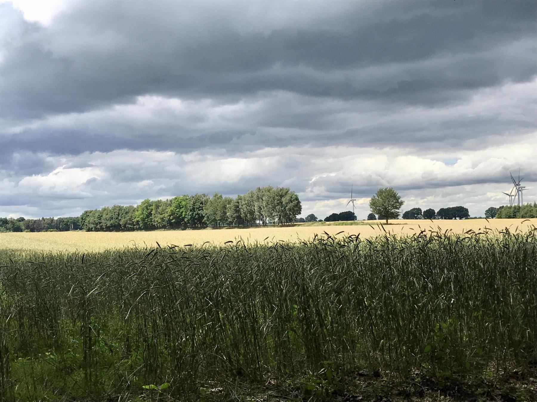 Felder kurz vor Travenbrück, Stormarnweg