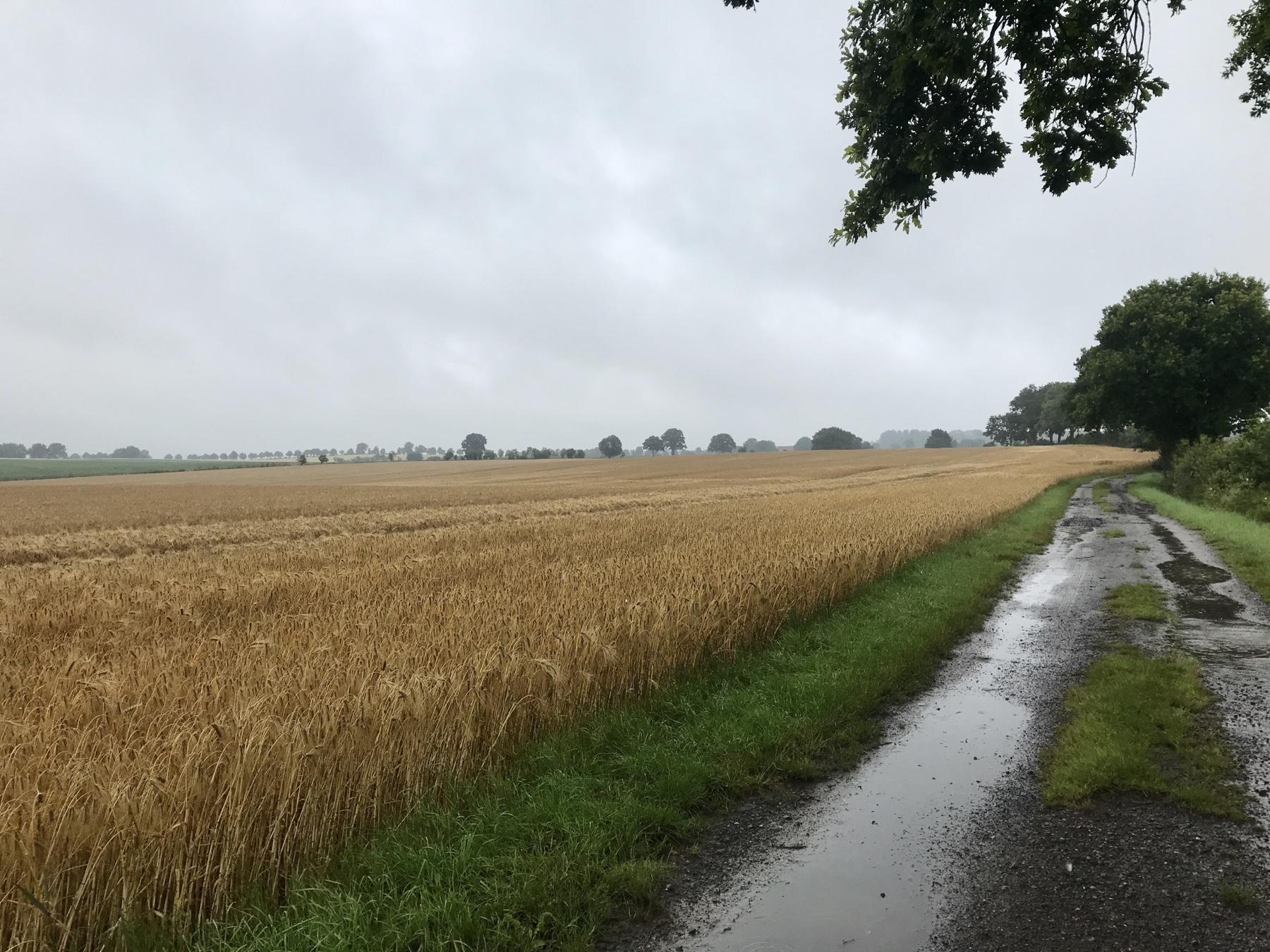 Auf dem Feldweg nach Reinfeld