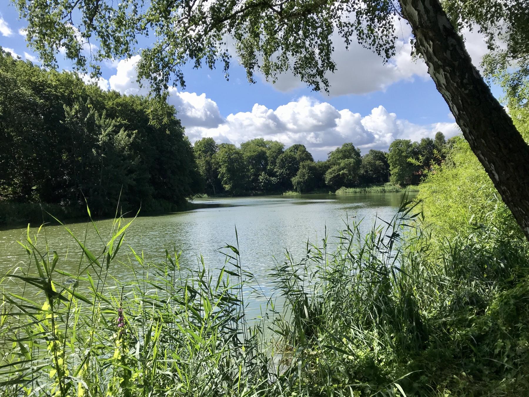Neuhofer Teich Reinfeld, Stormarnweg Etappe 6