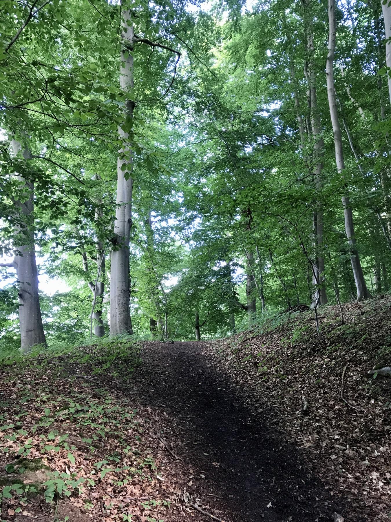 Waldstück entlang der Trave unterhalb von Hamberge, Stormarnweg Etappe 6 nach Lübeck