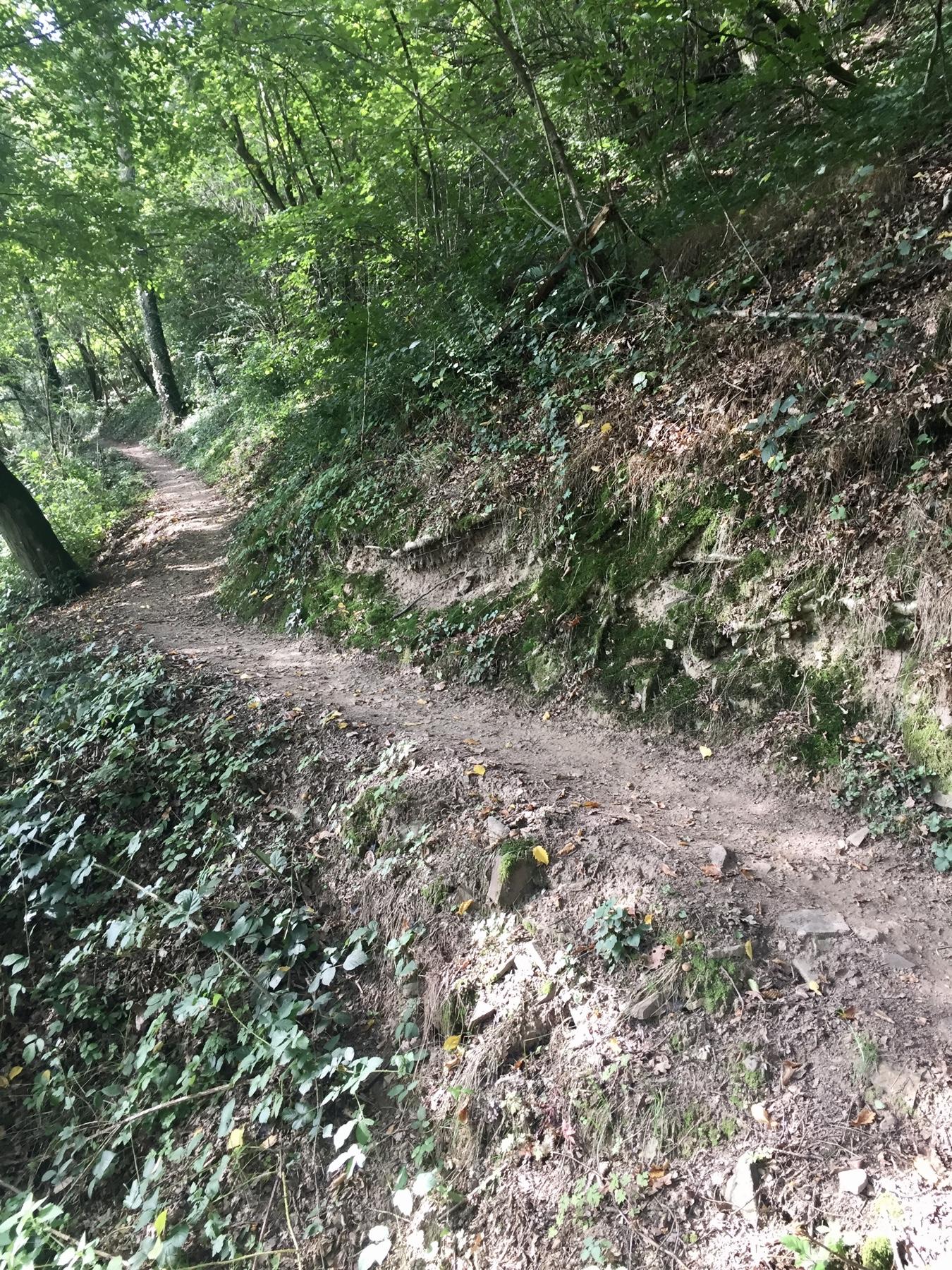 Aufstieg zum Küppchen Moselcamino Etappe 2