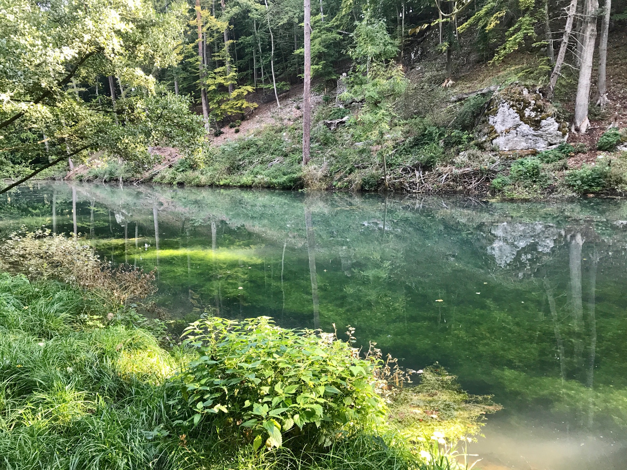 Albsteig HW1, Etappe 2, Quellweiher Hohenaltheim